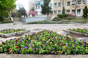 Park na Terase rozkvitol novovysadenými kvetmi.