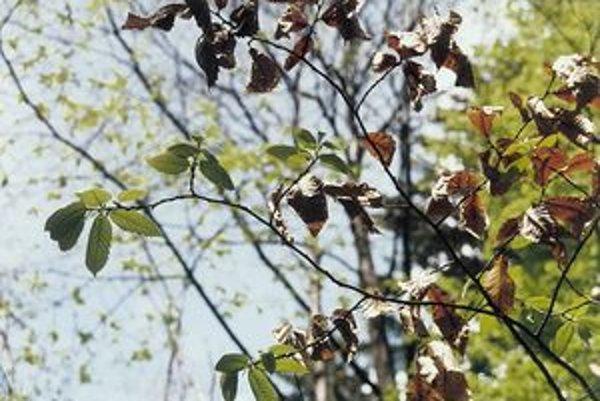 Chorobou napadnutý strom.