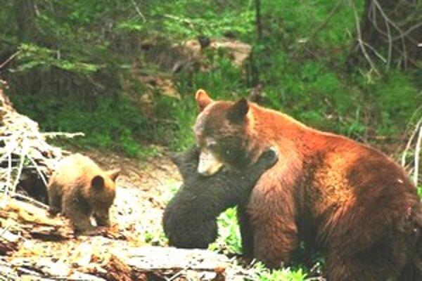 Lesní robotníci videli medvedicu, ktorú dusil obojok.