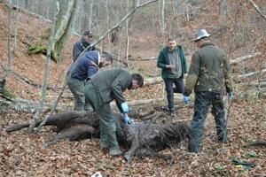Uhynutú zubricu našli vlani v novembri v lese. Pitvu vykonal veterinár Vladislav Juško (druhý sprava).