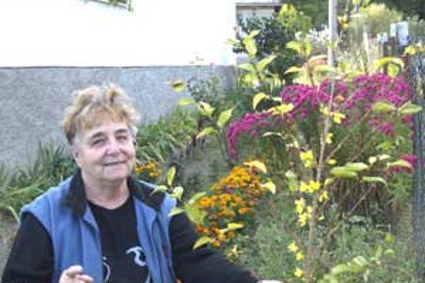 Zlatý dážď vykvitol v týchto dňoch v záhrade Vandy Čudovskej.