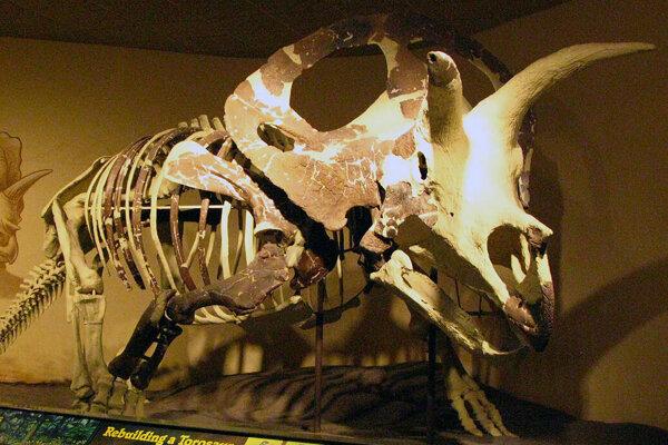 Torosaurus.