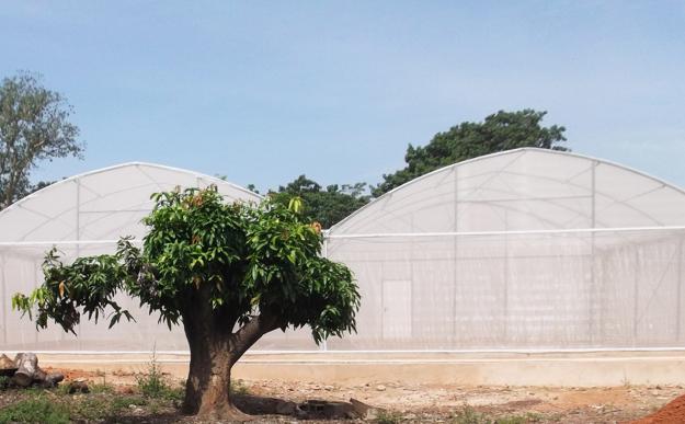 Model dediny MosquitoSphere, v ktorom skúmali účinok geneticky modifikovanej huby na komáre, ktoré prenášajú maláriu.