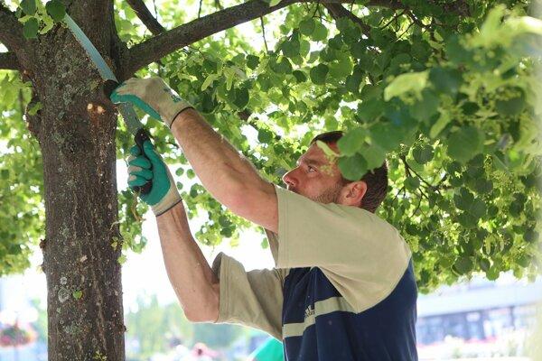 Orezy vykonal certifikovaný arborista.