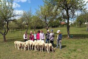 V škole chovajú ovce.