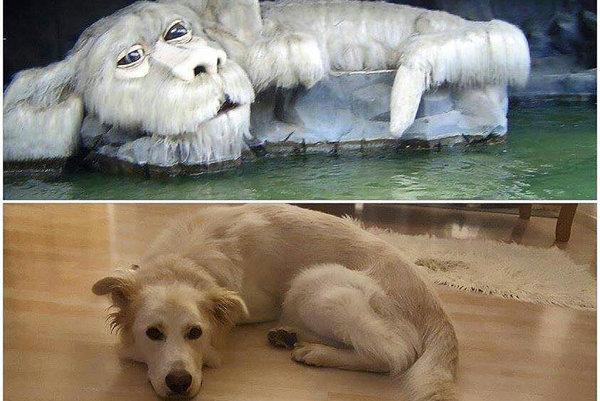 Mišo. Odchytili ho vokolí Žaškova, vkaranténnej stanici žil niekoľko mesiacov. Uskákané bláznivé šteňa, ktoré milovalo vodu adlhé prechádzky, dlho nikto nechcel. Dnes žije vRakúsku vpriam neskutočnom domove arodine pripomína slávneho filmového Falca.