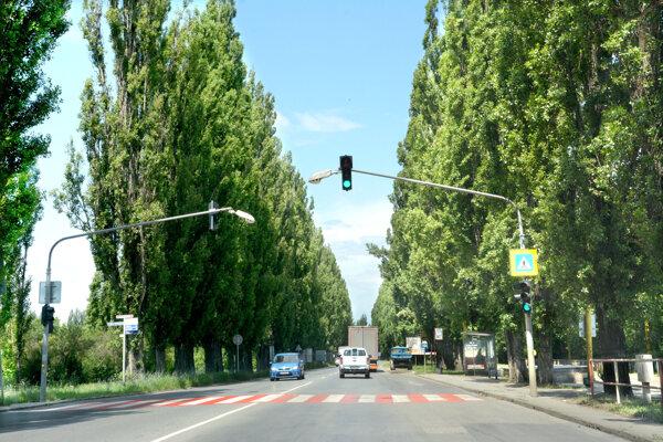 Po modernizácii cesty už nebude komunikáciu lemovať alej topoľov. Projekt počíta s výsadbou 30 stromov.