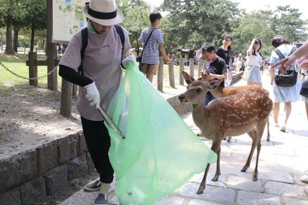 Jeleň sika v parku v japonskom meste Nara.