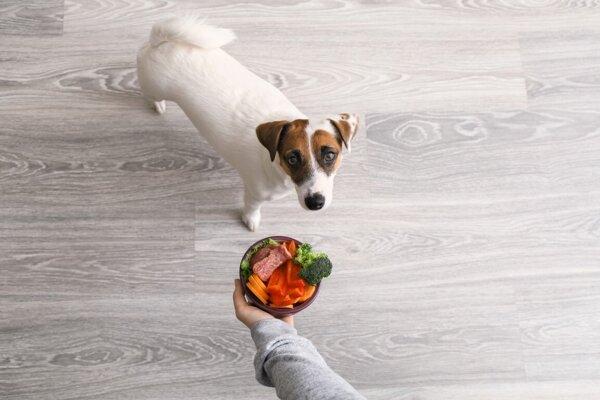 Niektorí ľudia chcú zo svojho psa a mačky spraviť vegána. Je to v poriadku?a
