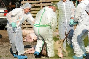 Práce na kompletnej likvidácii chovov ošípaných v obci trvali niekoľko hodín.