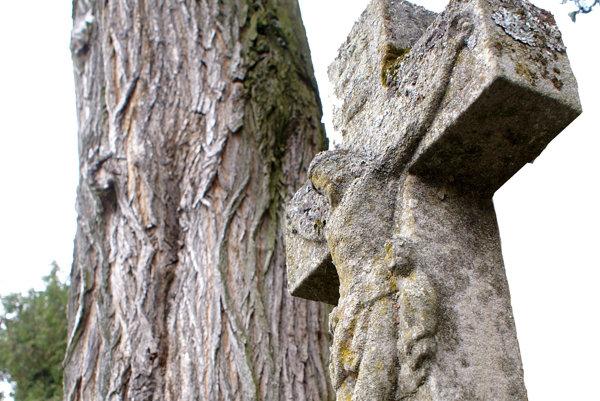 Strom i kríž majú hlboké korene.