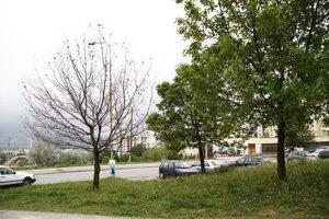 Strom na Klokočine bez listov.