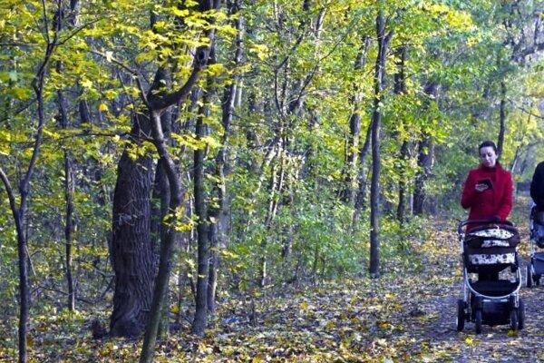 Prešovčania by chceli mať lesopark.