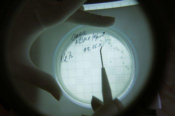 Vedci bunku E. coli naučili čítať nový príkaz  v DNA.