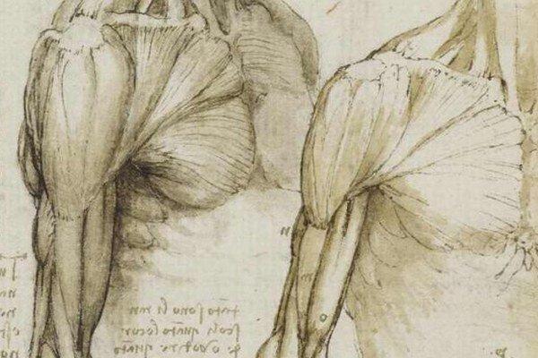 Da Vinciho kresby zo 16. storočia vystavia v edinburskej galérii The Queen v auguste.