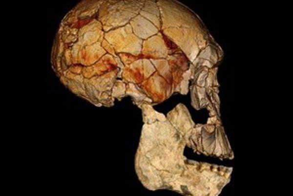 H. rudolfensis žil pred dvomi miliónmi rokov.