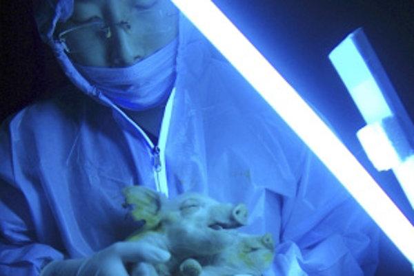 Budúcnosť mäsa môže byť v laboratórnej výrobe.