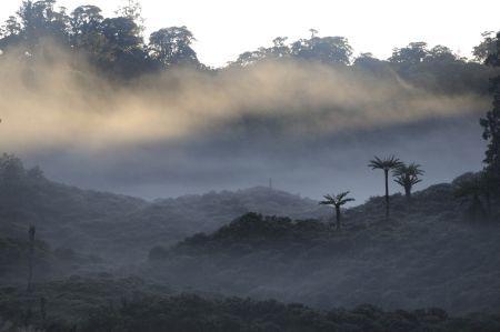 stromove_kengury12.jpg