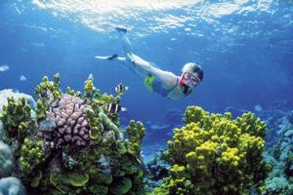 Koralove útesy neďaleko Austrálie už čoskoro môžu prestať jestvovať.