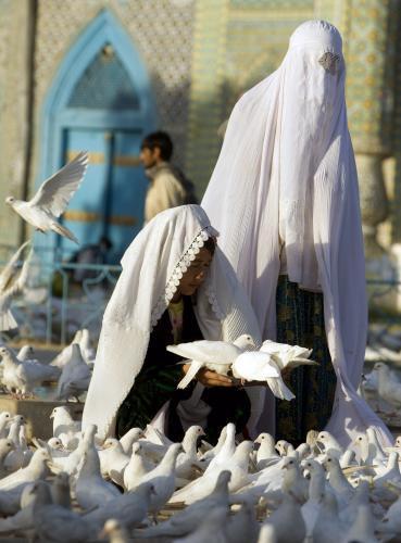 holuby-afganistan2_tasrap.jpg