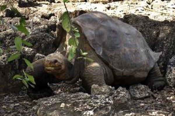 Výnimočné druhy rastlín a živočíchov, ako je aj obria korytnačka, na ekvádorskom súostroví Galapágy lepšie chránia.
