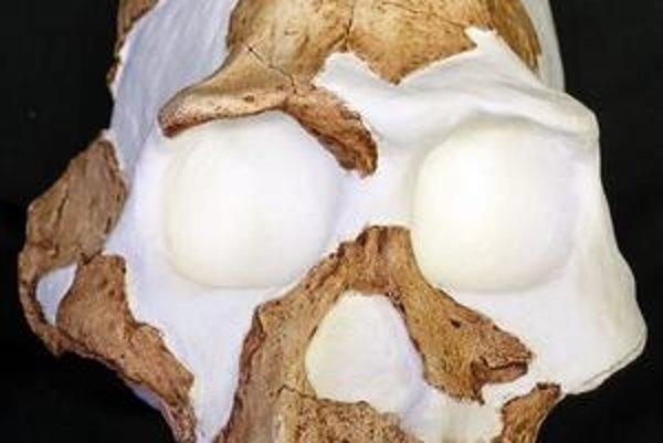 Tajomným medzičlánkom nie je asi ani Homo gautengensis, ani Australophitecus sediba.