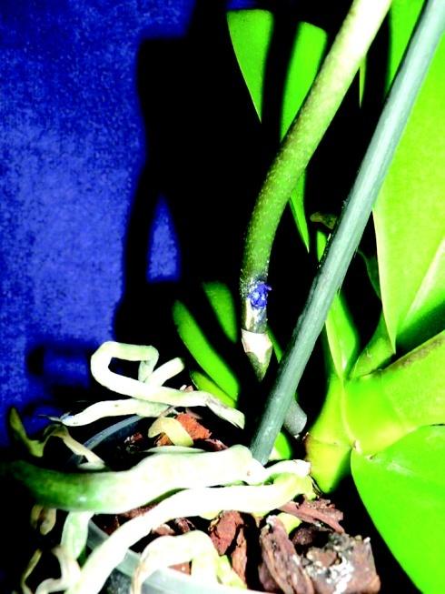orchidea1_web.jpg