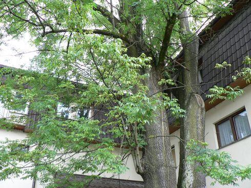 strom1web.jpg