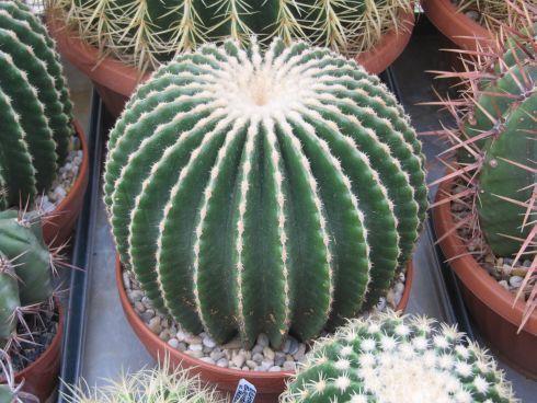 kaktus-zmenseny-dva.jpg