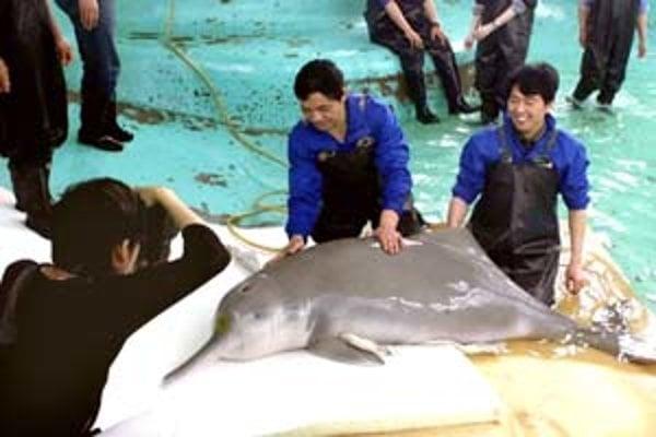 Delfínovec čínsky na archívnej snímke z roku 2002.