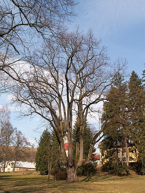 chranene_stromy_2.jpg