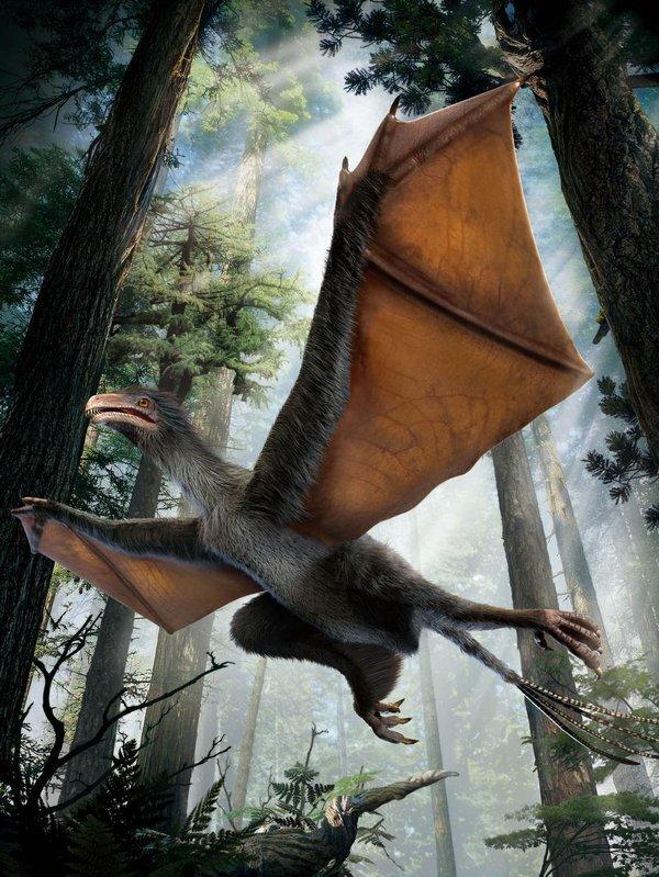 dinosaur_wings-ffb4656dda6d4c2cae4bcc02b_r3785_res.jpeg