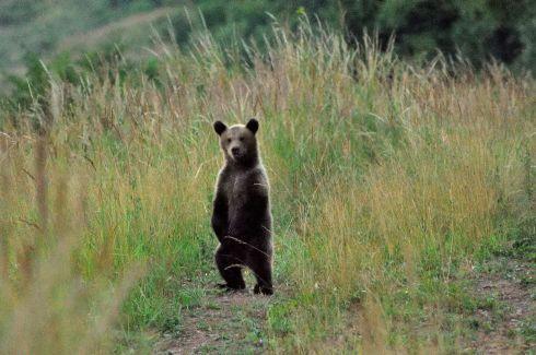 medvedie-mlada.jpg