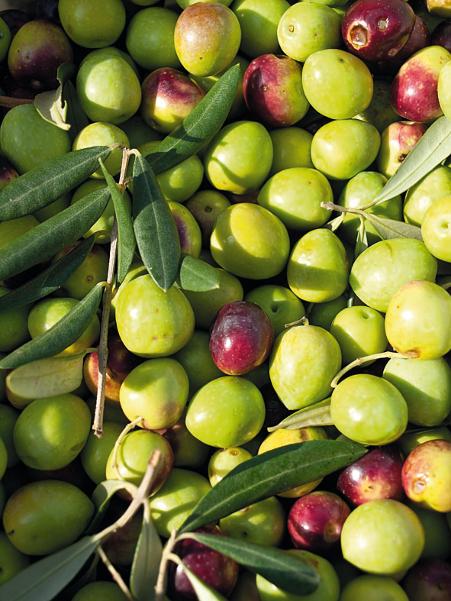 olivy.jpg