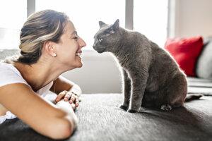 Mačky si k človeku vytvárajú väzby podobne ako nemluvňatá a psy.