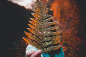 Prírodný saponín sa vyskytuje v mnohých rastlinách, ktoré rastú v rôznych kútoch sveta. Juhoamerickí indiáni tak používali napríklad penivé účinky quinoi a niektoré kmene severoamerických Indiánov zas na očistu vlasov používali výťažky z lesného papradia.
