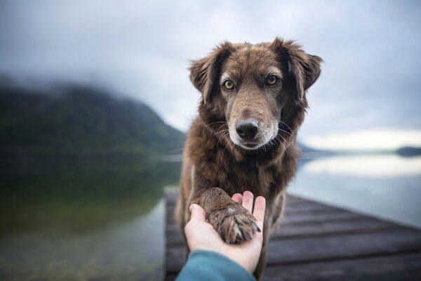 Psy sa zamilujú oveľa ľahšie ako ľudia, hovorí psychológ Clive Wynne.