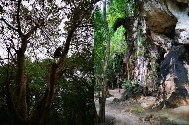 Výlet do mangrovníkového lesa
