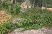 Stromy popadali aj pri Tatranskej Lomnici.