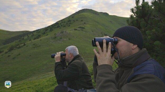 Mapovatelia počas monitorovania medveďa v Malej Fatre.