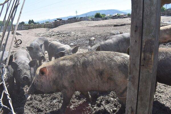 Z farmy odviezli aj posledné zvieratá.