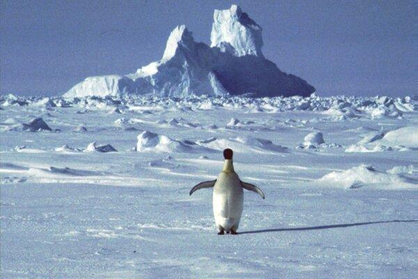 Družice odhalili nové kolónie tučniaka obrovského.