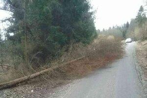 Vietor váľal stromy na mnohých miestach v Turci.