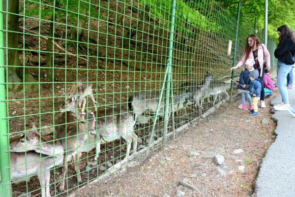 Zoologická záhrada v Košiciach.