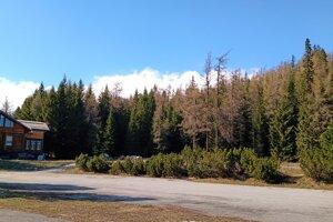 Helios obklopuje les, vyrásť by tam mala nová zjazdovka s 800-metrovým vlekom.