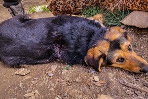 Zvieratá na následky zranení uhynuli.