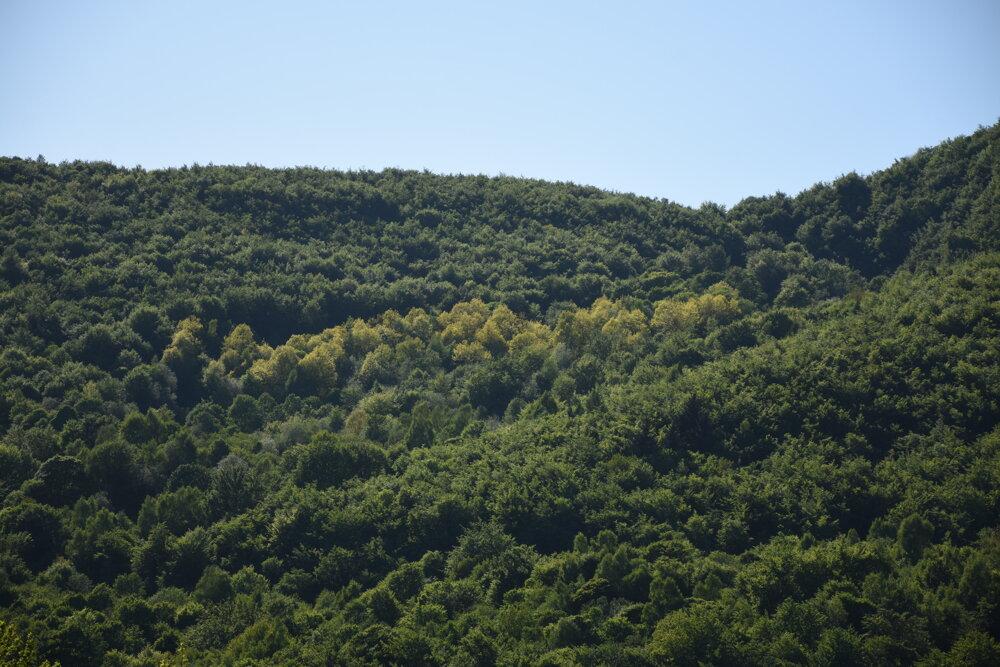 Lesy v okolí Ruského Potoka.