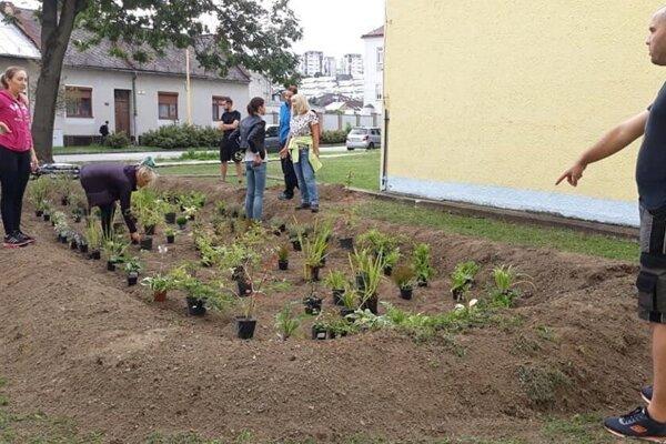 Možnosťou, ako udržať vodu, sú aj dažďové záhrady.