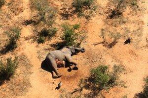 Iné zvieratá nie sú mŕtve. Taktiež v okolitých krajinách podobné úmrtia nezaznamenali.