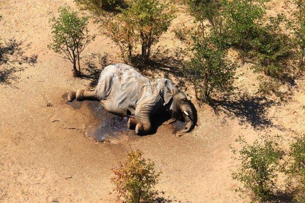 Niektoré mŕtve slony mali scvrknuté telá.